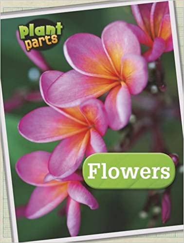 Plant Parts Pack A of 5