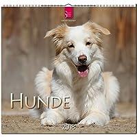 HUNDE: Original Stürtz-Kalender 2018 - Mittelformat-Kalender 33 x 31 cm