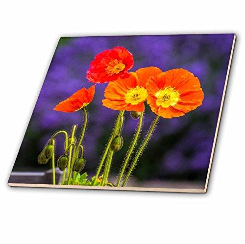 3dRose USA, Washington State, Poppies on Display Decorative Tiles, Clear