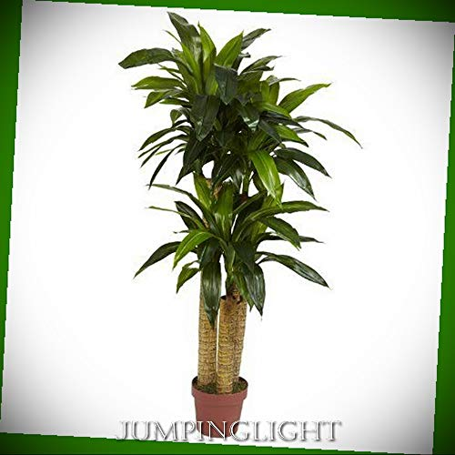 - JumpingLight 6648 4' Corn Stalk Dracaena Silk Plant (Real Touch) Artificial Flowers Wedding Party Centerpieces Arrangements Bouquets Supplies