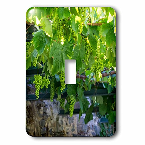 3dRose lsp_249436_1 Portugal, Douro Valley, Grapes at a Vineyard Toggle Switch ()