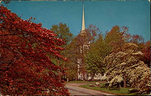 Dogwoods Bloom In Southern Connecticut Original Vintage -