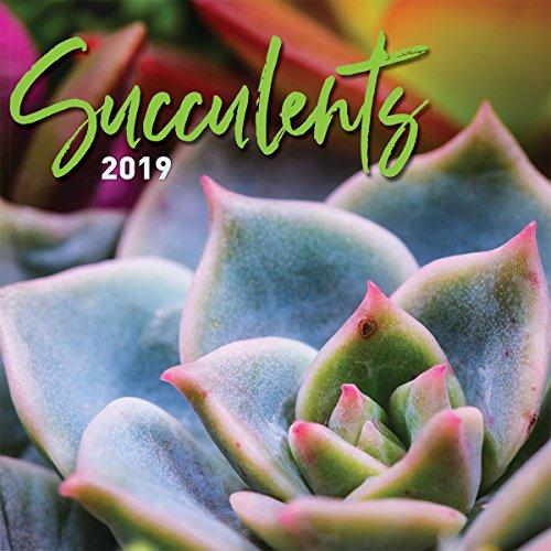 Turner Photo Succulents 2019 Wall Calendar (199989400840 Office Wall Calendar (19998940084) by Turner
