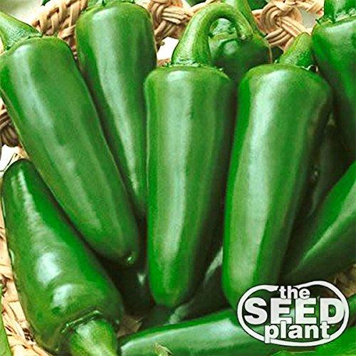 Tam Jalapeno Seeds - 150 Seeds Non-GMO