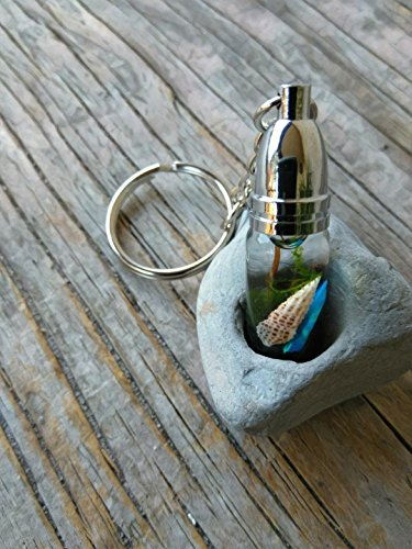 Marimo Moss Terrarium Keychain - Live Aquatic Plants- Stainless Steel