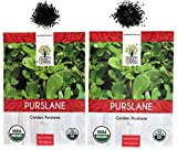 Organic Golden Purslane (Verdolaga) Seeds - 2 Seed Packets! - Over 1000 Open Pollinated Non-GMO USDA Organic Seeds - World's Healthiest Green!