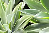 Botanical Abstract Shades of Green Picture, Tropical Foliage Print, Nature Decor Wall Art