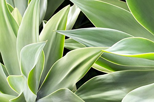 Botanical Abstract Shades of Green Picture, Tropical Foliage Print, Nature Decor Wall Art by Maui J & M Photography