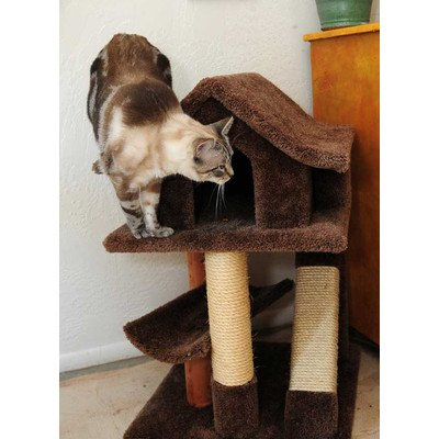 Mini Cat Pagoda with Sisal Rope Ramp Color: Brown, My Pet Supplies