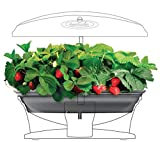 Strawberry Kit-AeroGarden Grow Bowl