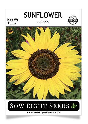 (Sow Right Seeds - Sunspot Sunflower Seed for Planting- Full Packet with Instructions, Beautiful Non-GMO Heirloom Flower to Plant, Wonderful Gardening Gift (1 Packet))
