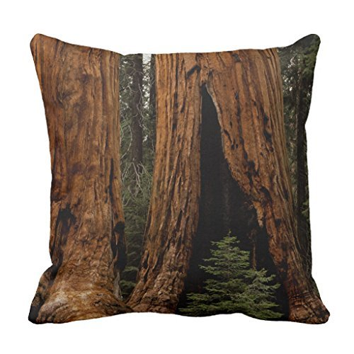 Redwood Trees, Sequoia National Park. Throw Pillow Cover Decorative Square Canvas Couch Cushion Cover Case with Zipper 18 x 18
