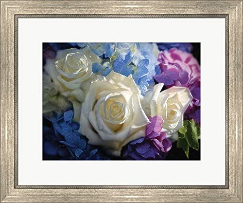 (White Roses - Dancing Light by Collin Bogle Framed Art Print Wall Picture, Silver Scoop Frame, 24 x 20)