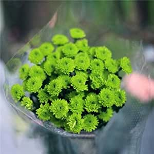 Starry Daisy flower seeds 100 Four Seasons indoor potted plants and flowers balcony flowers meaty fall and winter