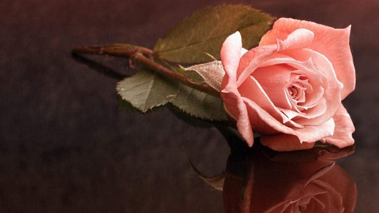 Kpoiuy Paquete De Pintura por NúMero En Lienzo Pintura Al óLeo DIY Rosa Soledad Superficie Reflejo Cuadros Pintados A Mano del Arte del Colorante De AcríLico para La Sala De Estar