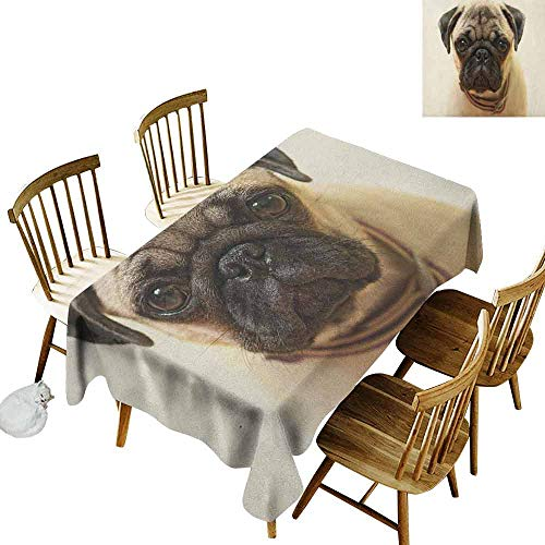 DONEECKL Pug Durable Tablecloth Washed Photograph of a Pug Pure Bred Puppy with a Loose Collar Cute Dog Pets Animal Pale Brown Black W52 xL70