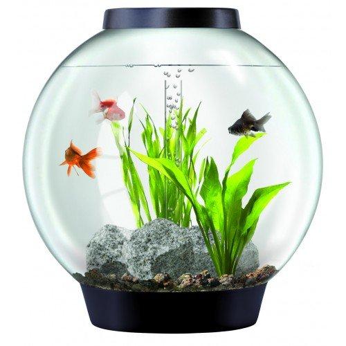 biorb Classic 105 L Agua Fría Acuario Juego completo con inteligente LED Luz: Amazon.es: Productos para mascotas