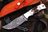Prime Quality Stag Handle Damascus Steel Full Tang Hunting Knife W/Case Review