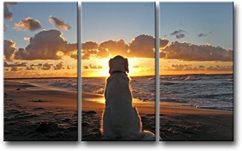 DOG beautiful /& colorful animals high quality Canvas painting  Home decor