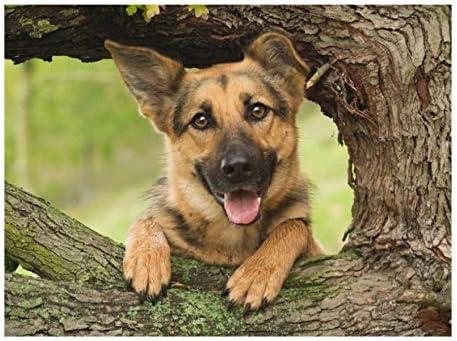 Rompecabezas hh puzzle 1000 piezas perro mascota, pastor alemán adulto ocio entretenimiento juguetes educativos para niños decoración navideña