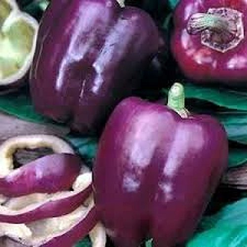 - Purple Beauty Bell Pepper 50 Seeds, Sweet, Non-GMO, Heirloom, Variety Sizes