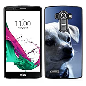 All Phone Most Case / Oferta Especial Duro Teléfono Inteligente PC Cáscara Funda Cubierta de proteccion Caso / Hard Case LG G4 // Chihuahua Puppy Serious Face Dog
