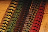 Ringneck Pheasant Tail Feathers-Natural