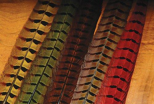 Ringneck Tail - Ringneck Pheasant Tail Feathers-Black