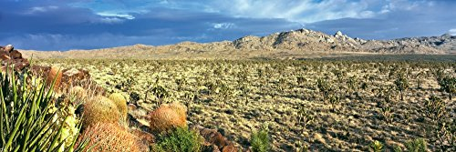 Posterazzi Yucca and Joshua Trees in a Desert Mojave National Preserve California USA Poster Print, (27 x 9)