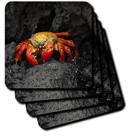 3dRose CST/_174474/_3 Image of Giant Crab from Galapagos Island Ceramic Tile Coasters Set of 4