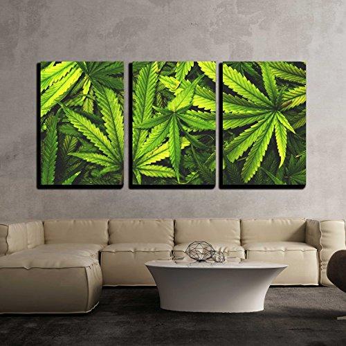 - 3 Piece Canvas Wall Art - Cannabis Texture Marijuana Leaf Pile