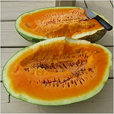 Package of 20 Seeds, Orangeglo Watermelon (Citrullus lanatus) Non-GMO Seeds By Seed Needs