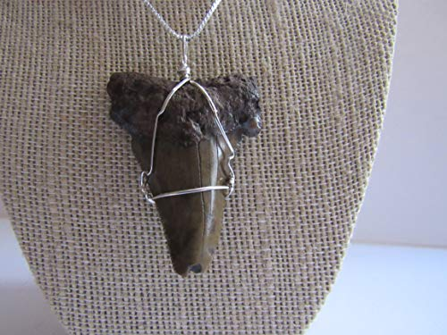 Megalodon Tooth Pendant Shark Tooth Necklace 925 Sterling Silver Fossilized Bone Jewelry N538