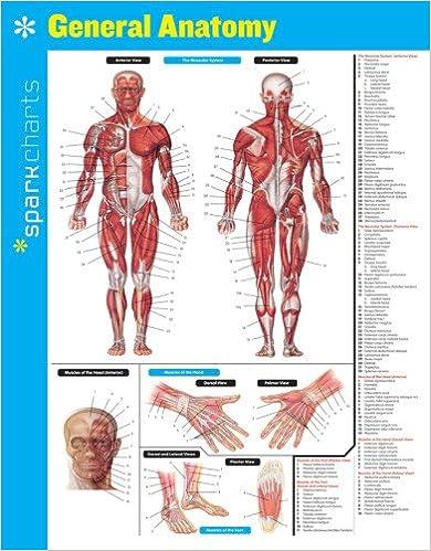 General Anatomy SparkCharts: 9781411470187: Medicine & Health ...