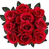 Supla 10 Stems Artificial Roses Red with Stems Open Silk Roses Velvet Roses Wedding Roses in Red 20' Tall X 4' Bloom for Floral Arrangement Home Accent