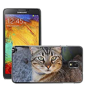 Etui Housse Coque de Protection Cover Rigide pour // M00114936 Gato Animal Head Cat // Samsung Galaxy Note 3 III N9000 N9002 N9005