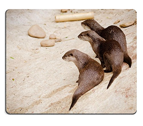 liili-mouse-pad-natural-rubber-mousepad-asian-small-otters-photo-19508417