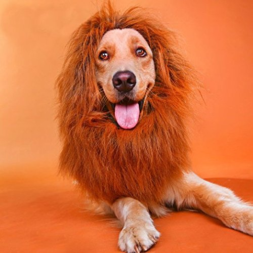 [Coolpay Pet Costume Lion Wigs and Lion Mane for Large Dog or Medium Dog, Perfect for Festival Party or Fancy Dress] (Dog Lion Costume Large)