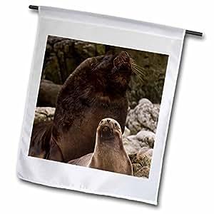 Danita Delimont - Sea Lions - Southern Sea lions, Cape Dolphin, Falkland Islands - SA09 POX0095 - Pete Oxford - 18 x 27 inch Garden Flag (fl_86508_2)