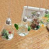 Ivolador 3PCS Lightbulb Glass Hanging Planter Vase