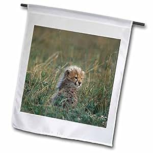 Danita Delimont - Cheetahs - Kenya, Masai Mara Game Reserve, Cheetah, Savanna-AF21 PSO0219 - Paul Souders - 12 x 18 inch Garden Flag (fl_71041_1)