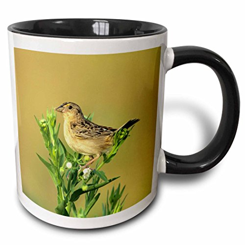 3D Rose 250878_4 Grasshopper Sparrow with Food, Prairie Ridge Sna, IL Two Tone Ceramic Mug, - Cup Prairie Rose