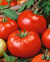 IRISH EYES GARDEN SEEDS - ORGANIC - Tomatoes - Early Bush Beefsteak 500mg