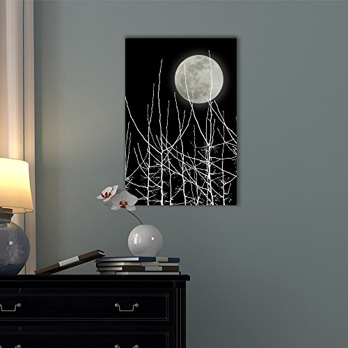 Full Moon in the Sky with White Tree Branches