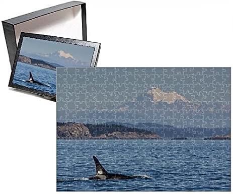 amazon com photo jigsaw puzzle of resident killer whale bull