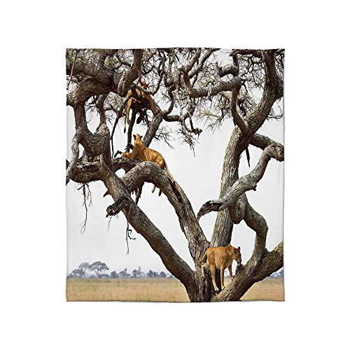 (ALUONI Fine Flannel Blanket,Safari Decor,for Home Travel Camping,Size Throw/Twin/Queen/King,A Pride of Lioness Panthera Leo Resting)