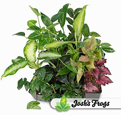 (Foliage Plant Bundle (5 Plants))