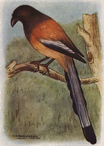 antique pie bird - 5