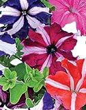 Starcrest Mix Petunia Seeds UPC 695928806652 +1 Plant Marker (100)