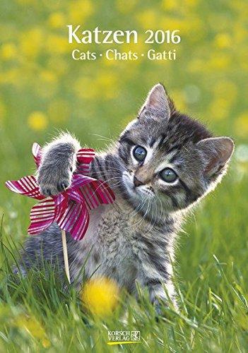 Katzen 2016